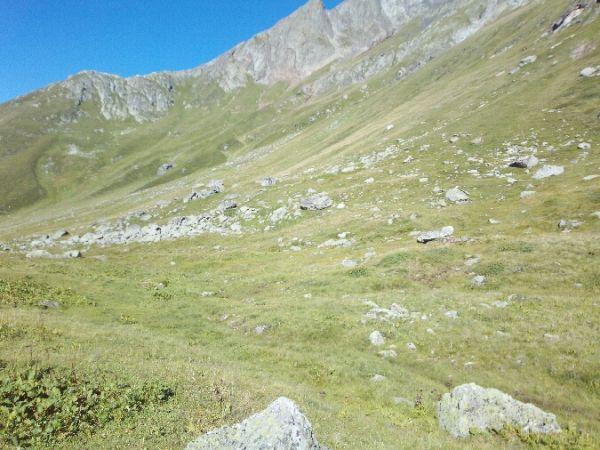 Monticole de roche  - Xavier Birot Colomb