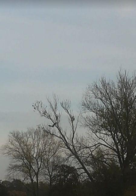 White-tailed Eagle  - Jessica Hack