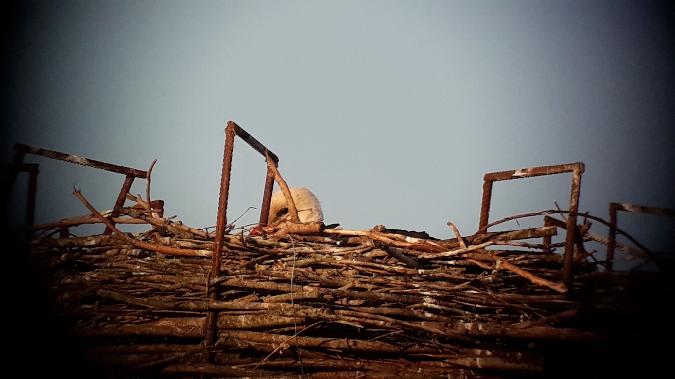 White Stork  - Jörg Heyna