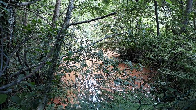Grenouille verte indéterminée (Pelophylax sp.)  - Alexandre Movia