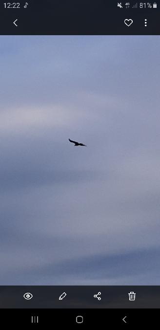 Griffon Vulture  - Rémy Meylan