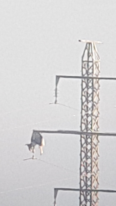 White Stork  - Jordi Vigué