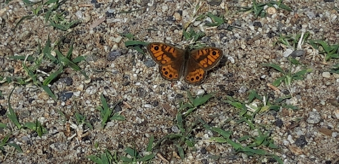 Wall Brown  - Michele Cento