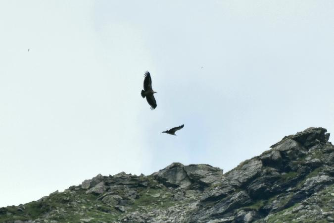 Griffon Vulture  - Filip Reiter