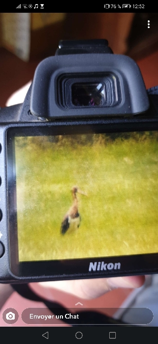 Cigogne noire  - William Save