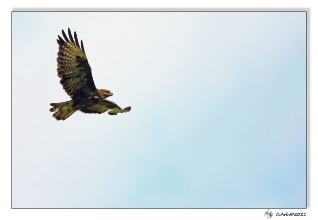 Buse variable  - Claude Ares