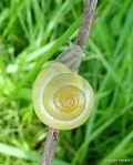 Bernard Regisser - Escargot des jardins