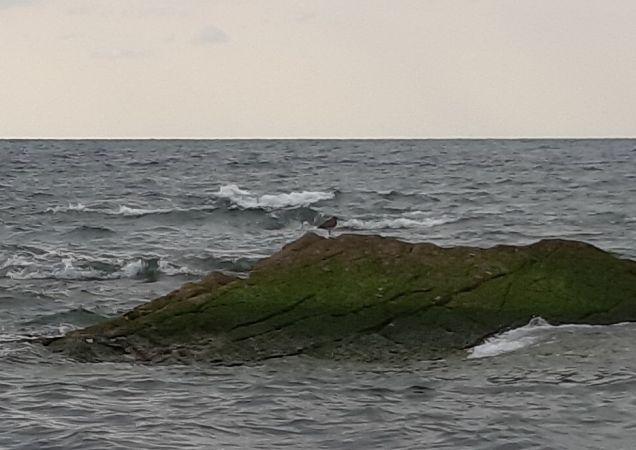 Godwit, unidentified  - Carine Bidegaray