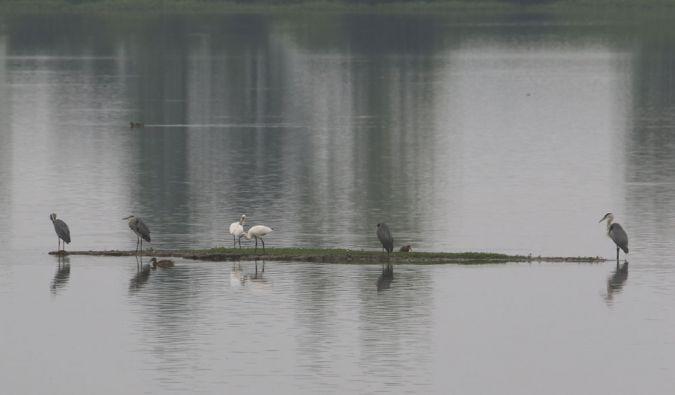 White Stork  - Alain Noel