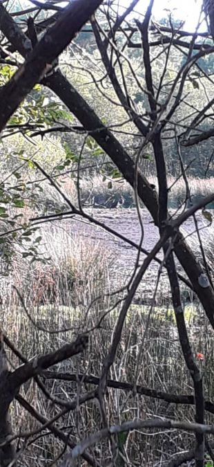 Cigogne noire  - Katell Le Pogam