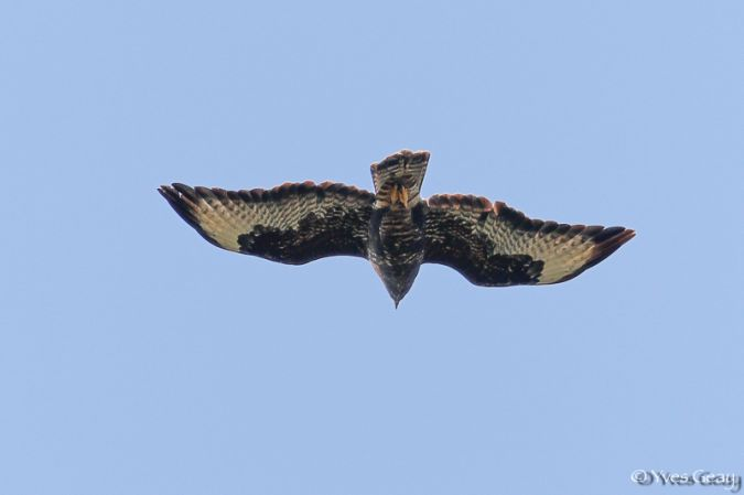 Buse variable  - Yves Geay