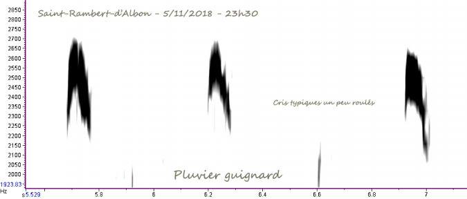 Pluvier guignard  - Vincent Palomares