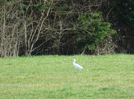 Little Egret  - Catherine Bonhomme