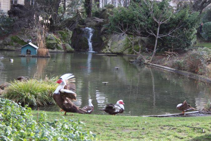 Canard de Barbarie  - Christiane Oliviéro