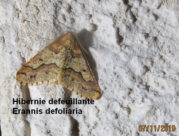 Hibernie défeuillante  - Georges Laurencin