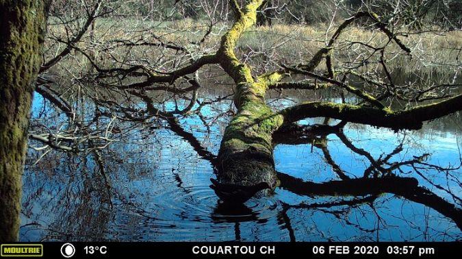 Gallinule poule-d'eau  - Christian Couartou