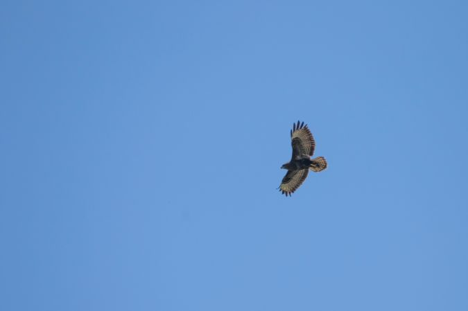 Buse variable  - Marc Le Moal