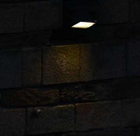 Tichodrome échelette  - Hugo Samain