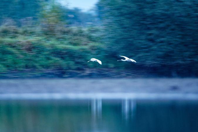 Spatule blanche  - Eric Medard