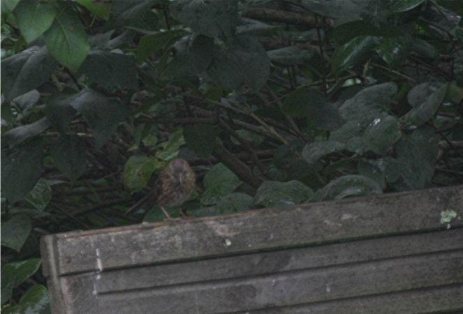 unidentified Bird  - Fabrice Duserre