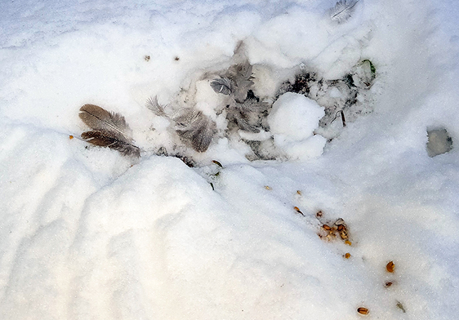 unbestimmter Vogel