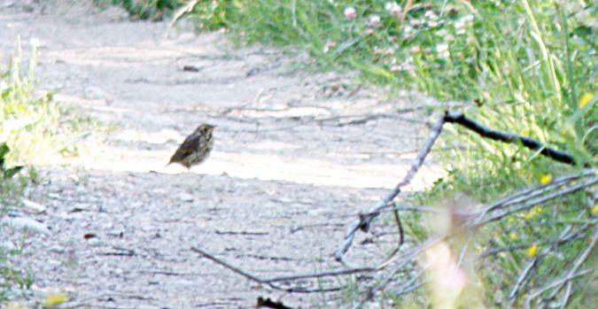 unidentified Bird  - Gundi Huber