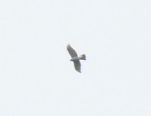 unidentified Bird  - Laurenz Krisch
