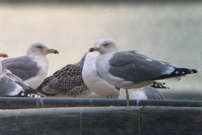 unbestimmter Vogel  - Jakob Vratny