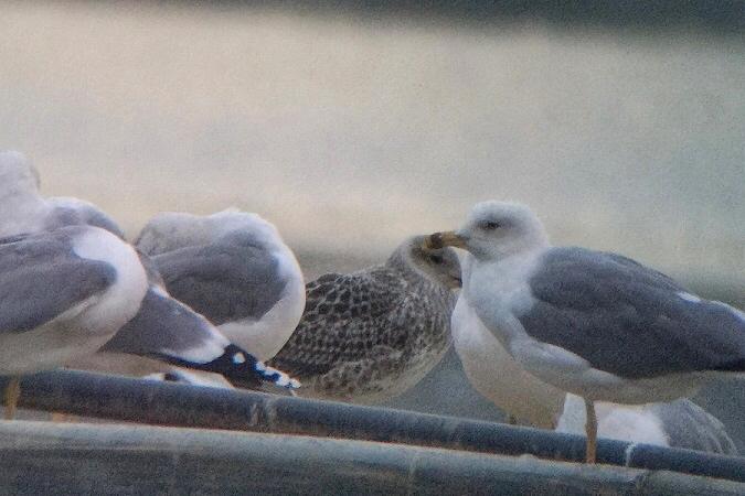 unidentified Bird  - Jakob Vratny