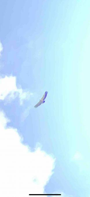 Griffon Vulture  - Lisa Lugerbauer