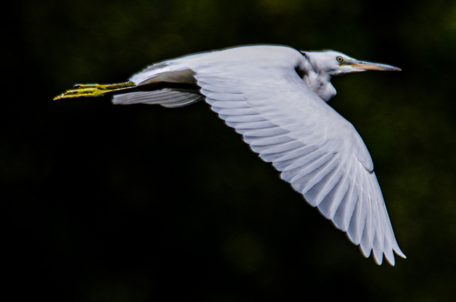 unidentified Bird  - Dominik Moser