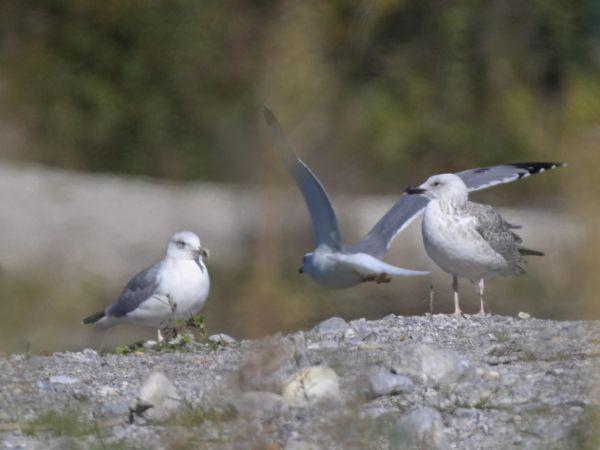 unidentified Bird  - Roland Sagmeister