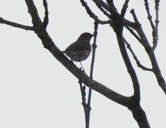 unidentified Bird  - Florian Mayr
