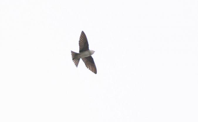 unidentified Bird  - Gebhard Brenner