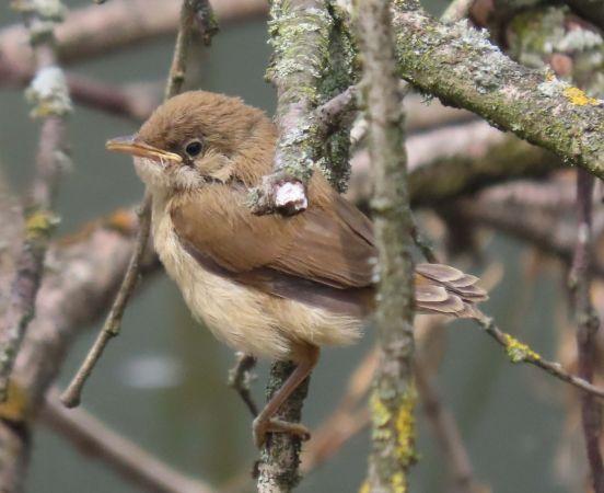 unidentified Bird  - Ulrike Knely