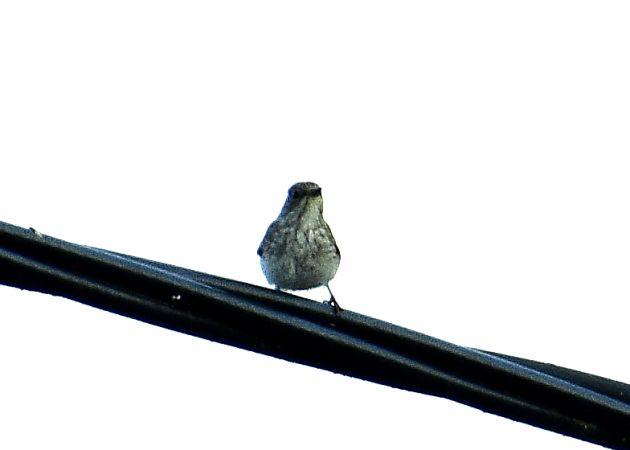 unidentified Bird  - Georg Juen