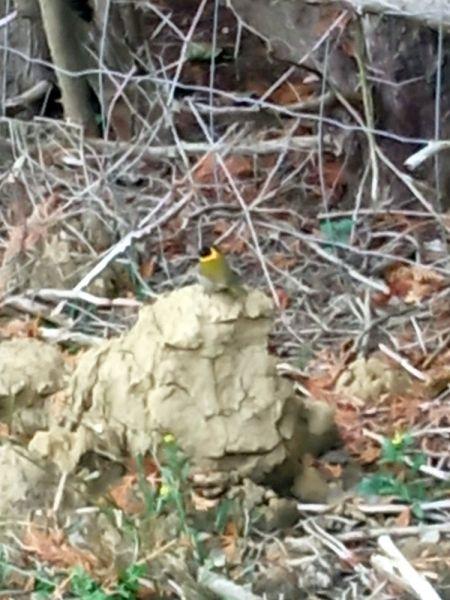 unidentified Bird  - Anonymous