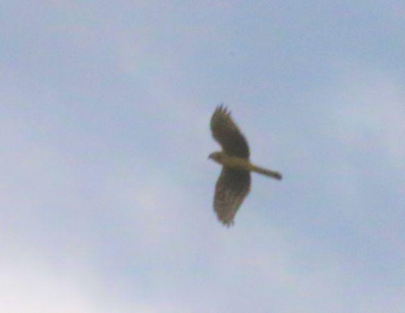 unidentified Bird  - Karl Heinz Krainer