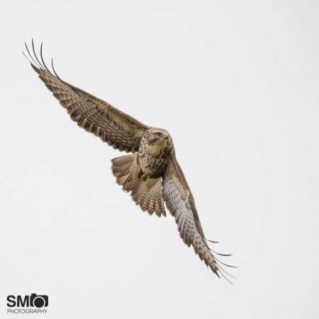 Buse variable  - Mohamed Somrani