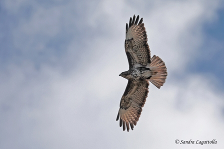 Buse variable  - Sandra Lagattolla