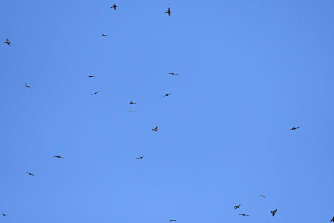 European Bee-eater  - Patrick Reymond