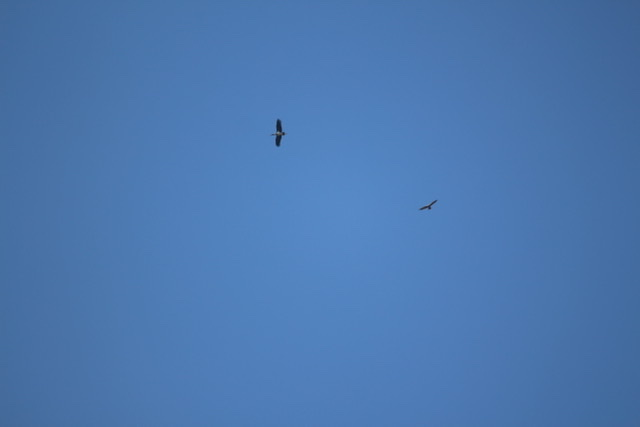 Black Stork  - Philippe et Semira Altot