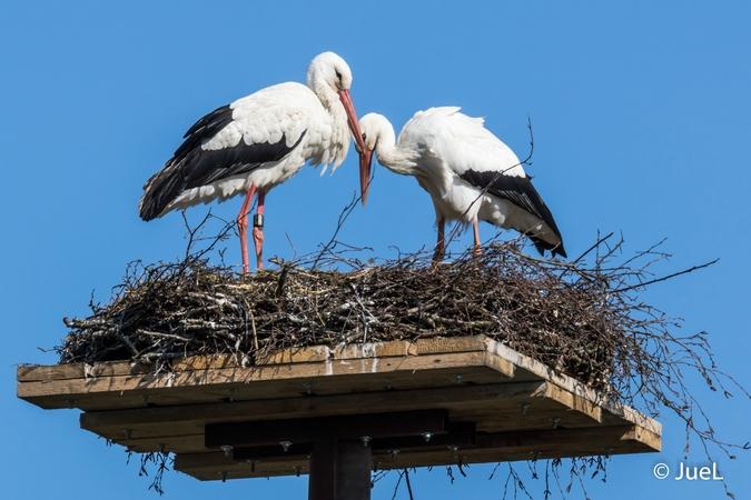White Stork  - Jürgen Lustig