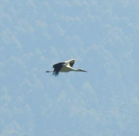 White Stork  - Aitor Urrutia