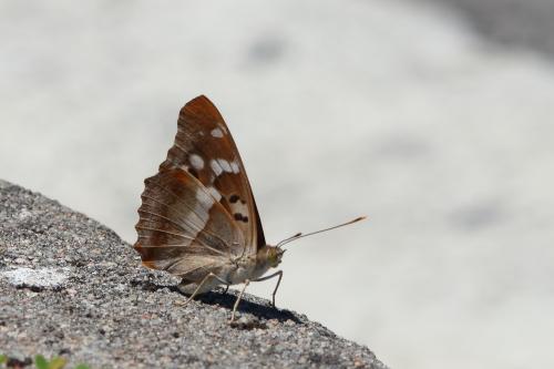 Petit Mars changeant  - Iñaki Mezquita Aranburu