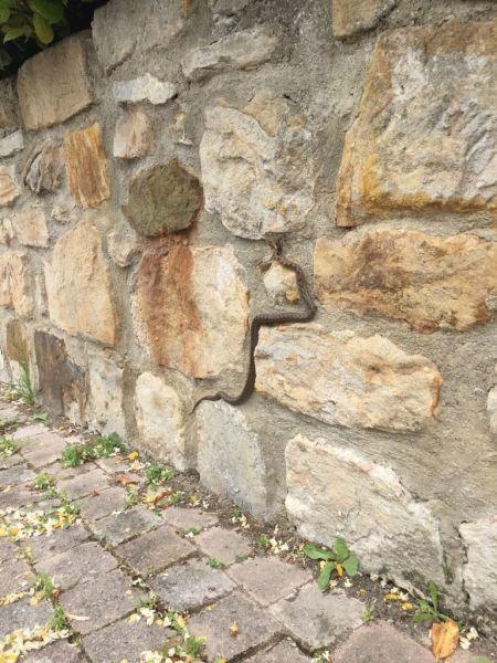Ladder Snake  - Maialen Mendigutxia