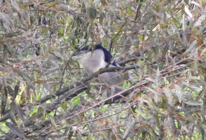 Black-crowned Night Heron  - Jarosław Gil